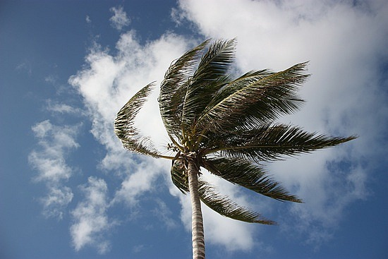 palm-tree-in-wind
