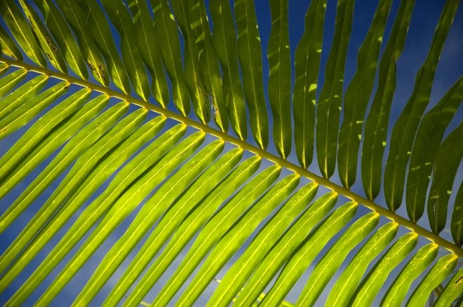palm-sunday-sermon-ideas-6
