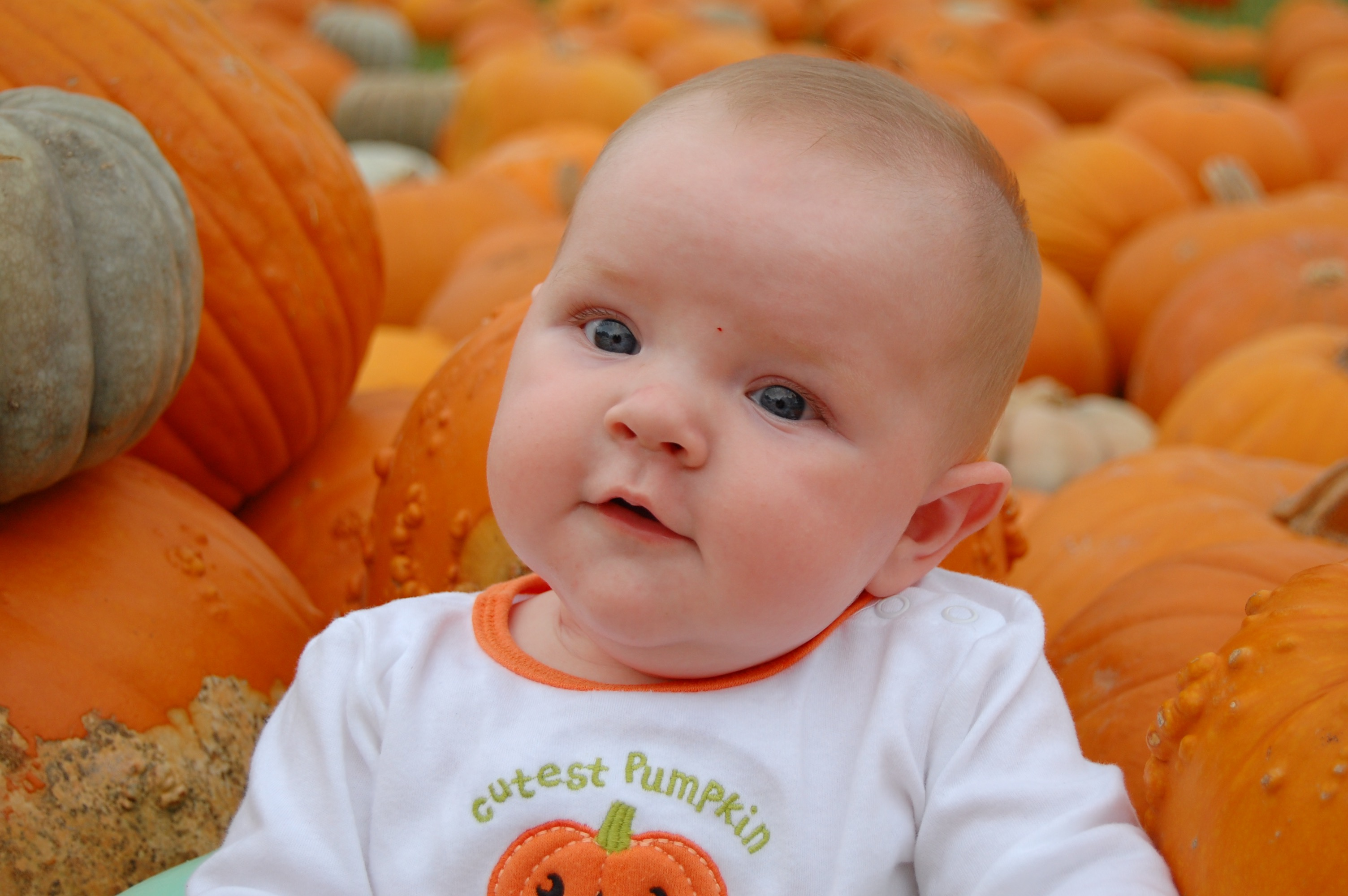 Pumpkin Patch 049.jpg